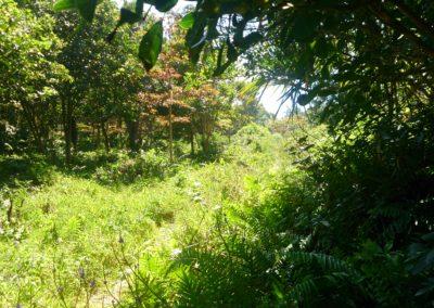 Sentier Cap Jaune (2)