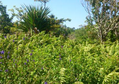 Sentier Cap Jaune (3)
