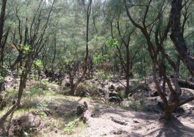 Sentier Cap Jaune (5)