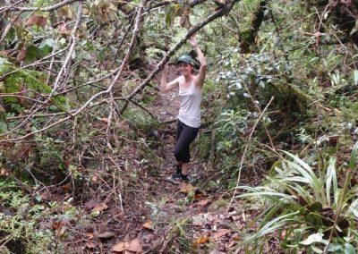 Sentier Forêt Bélouve