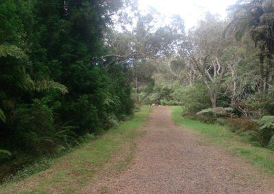 Sentier Trou de fer (2)